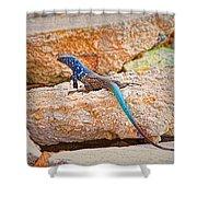 Male Bonaire Whiptail Lizard Shower Curtain