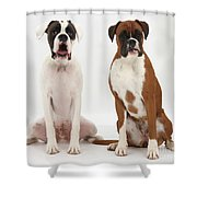 Male Boxer With Female Boxer Dog Shower Curtain