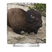 Male Buffalo At Hot Springs Shower Curtain
