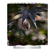 Male Bushtit Shower Curtain