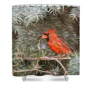 Male Cardinal In Spruce Tree Shower Curtain