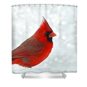 Male Cardinal In The Snow - Digital Paint Shower Curtain