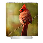 Male Cardinal In The Sun - Digital Paint Shower Curtain