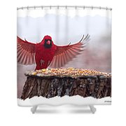 Male Cardinal Landing  Shower Curtain