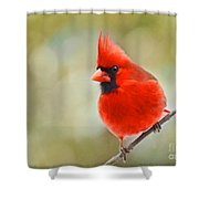 Male Cardinal On Angled Twig - Digital Paint Shower Curtain