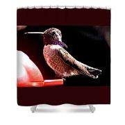 Male Costa Hummingbird On Perch Shower Curtain