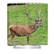 Male Deer On Field Shower Curtain