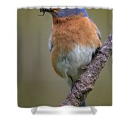 Male Eastern Bluebird With Spider Shower Curtain