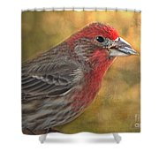 Male Finch With Seed Shower Curtain
