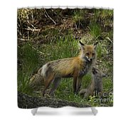 Male Fox And Pup   #3554 Shower Curtain