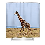 Male Giraffe Making An Entrance Shower Curtain by Perla Copernik