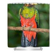 Male Golden-headed Quetzal Shower Curtain