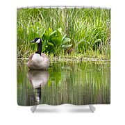 Male Goose  Shower Curtain