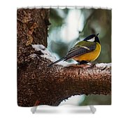 Male Great Tit Shower Curtain