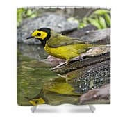 Male Hooded Warbler Shower Curtain