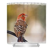 Male House Finch - Digital Paint And Frame Shower Curtain