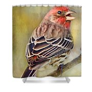 Male House Finch - Digital Paint Shower Curtain