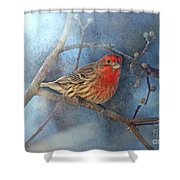Male House Finch With Blue Texture Shower Curtain