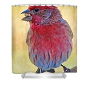 Male Housefinch - Digital Paint Shower Curtain