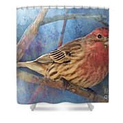 Male Housefinch Digital Paint Shower Curtain