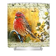 Male Housefinch Photoart Shower Curtain