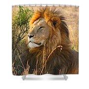 Male Lion Shower Curtain