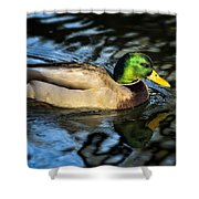 Male Mallard Shower Curtain