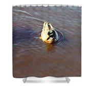 Male Mallard Duck Shower Curtain