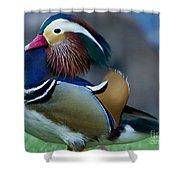 Male Mandarin Duck-signed-#8301 Shower Curtain
