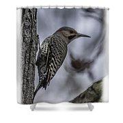 Male - Northern Flicker Shower Curtain