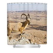Male Nubian Ibex Capra Ibex Nubiana 1 Shower Curtain