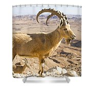 Male Nubian Ibex Capra Ibex Nubiana Shower Curtain