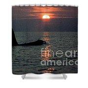 Male Orca At Sunset Off San Juan Island Washington 1986 Shower Curtain