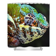 Male Panther Chameleon Furcifer Shower Curtain