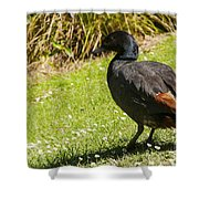 Male Paradise Duck Shower Curtain