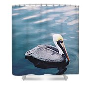 Male Pelican Shower Curtain