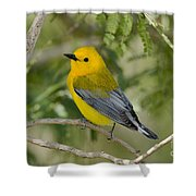 Male Prothonotary Warbler Shower Curtain