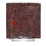 Male Red Cardinal In The Snow Shower Curtain
