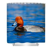 Male Red Head Duck Shower Curtain
