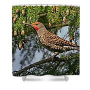 Male Red-shafted Northern Flicker Shower Curtain
