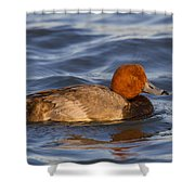 Male Redhead Duck Shower Curtain