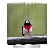 Male Rose-breasted Grosbeak Shower Curtain
