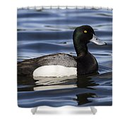 Male Scaup Shower Curtain