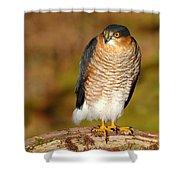 Male Sparrowhawk Shower Curtain