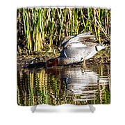 Male Teal Shower Curtain