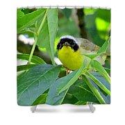 Male Warbler Shower Curtain