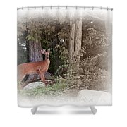 Male Whitetail Deer Shower Curtain