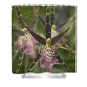 Maliko Dreams Shower Curtain