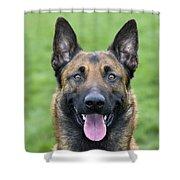 Malinois, Belgian Shepherd Dog Shower Curtain