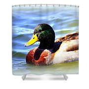 Mallard - 3000-l-012- Shower Curtain